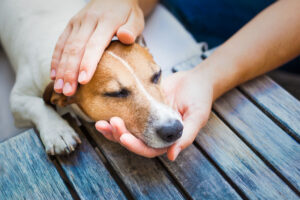 Pet Care Calming Oil Extract